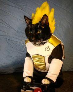 Nyan Cat, Loki, Sailor Moon, Dragonball Super, Hello Kitty, Cat Cosplay, Halloween Disfraces, Dragon Ball, Anime
