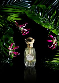 Annick Goutal - Songes (photo Candice Milon)