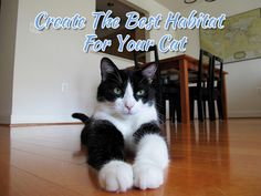 Create The Best Habitat For Your Cat - Cattery Index