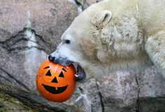 Not sure if I would be smiling in the same situation - but the pumpkin doesn't seem to mind! Thanks for the laugh Cincinnati Zoo!