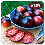 Organic Indigo Apple Tomato I want to try this one so badly! I love the blue tomatos! #highmowingseeds