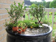 Great ideas on the right plants for a fairy garden Mini Fairy Garden, Gnome Garden, Micro Garden, Garden Bed, Garden Spotlights, Garden Ideas To Make, Little Gardens, Small Gardens, Miniature Fairy Gardens