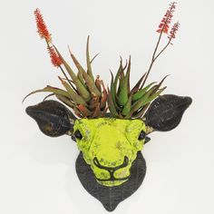 VISI / Articles / Fauna and flora. Wire animals serve as plant pots where the plant creates antlers. Succulents In Containers, Succulents Garden, Succulent Arrangements, African Love, African Art, Air Plant Display, Plant Decor, Air Plants, Indoor Plants