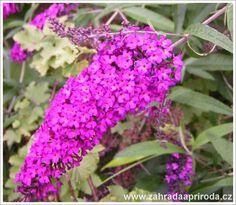 Nejkrásnější keře do zahrady - Zahrada a Příroda kvetoucí keře Plants, Gardening, Lawn And Garden, Plant, Planets, Horticulture