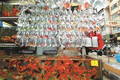 Gold Fish Market in Mong Kok, Hong Kong