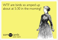 WTF are birds so amped up about at 5:30 in the morning?
