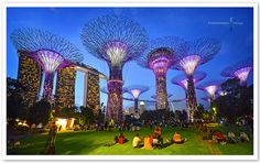 Supertree Grove, Gardens By The Bay | Flickr - Photo Sharing!