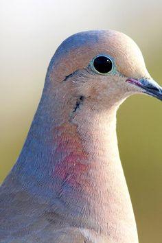 New free photo from Pexels: https://www.pexels.com/photo/shallow-focus-photography-of-white-blue-and-orange-bird-154510/ #bird #animal #beak