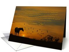 Spiritual Holistic New Age Sympathy Card With Horse and Birds card