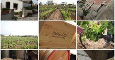 In Sicilia presso la cantina di Paolo Calì nelle suo vigne di frappato e nero d'avola ad assaggiare vini di grande armonia