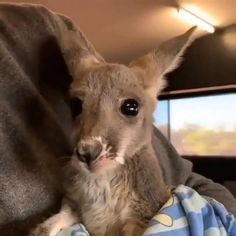 Cute Wild Animals, Baby Animals Super Cute, Baby Animals Pictures, Cute Animal Photos, Cute Animal Videos, Cute Little Animals, Cute Funny Animals, Animals Beautiful, Animals And Pets