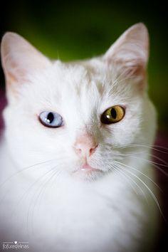 Look me in the eyes   cat