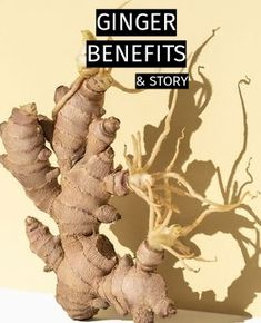 Ginger is a traditional herb that's remarkably versatile both as a culinary spice and as an herbal remedy. Ginger root has been used for over 5,000 years as a medicinal herb in both traditional Chinese and Indian Ayurvedic healing practices. ⠀⠀⠀⠀⠀⠀⠀ ⠀⠀⠀⠀⠀⠀ It can reduce fatigue by improving blood circulation and blood sugar levels. And it can boost your immune system while having an anti-inflammatory effect! ✨ ⠀⠀⠀⠀⠀⠀⠀ Our Turmeric & Ginger Extract supplement is what you are looking for!  Ginger Extract, Turmeric Extract, Turmeric Root, Ginger Supplement, How To Help Nausea, Ayurvedic Healing, Ginger Benefits, Allergy Symptoms