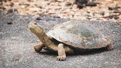 Elizabeth Gilbert, Broccoli, Wildlife, Box Turtles, Chicken, Animals, Inspiration, Sink Tops, Winter Time