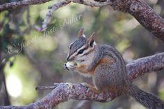 Squirrel at the Grand Canyon  2008 Nikon D60