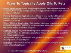 Ways to apply essential oils to your pets. Info for dogs & cats -