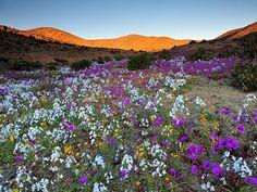 цветные горы китая - Поиск в Google