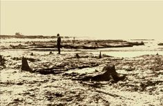 Meols beach, submerged forest.