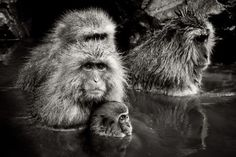 Mother and child Photo by Teruo Araya -- National Geographic Your Shot