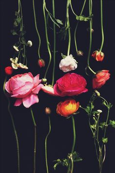 Florals by Justina Blakeney #flowers #black #background - Carefully selected by GORGONIA www.gorgonia.it