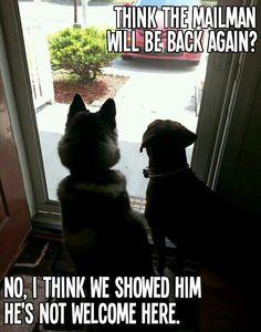 @ Dogs v. Mailman