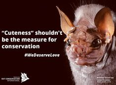 """Cuteness"" shouldn't be the measure for #conservation. UGLY doesn't mean UN-important"