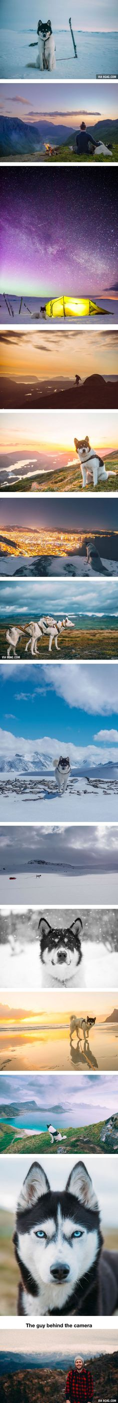Husky Goes On Incredible Trip To Norway With Owner (By Henrik Vikse)