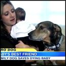 A Dying Baby is Saved by a Dog the Family Rescued - Unbelievable Video
