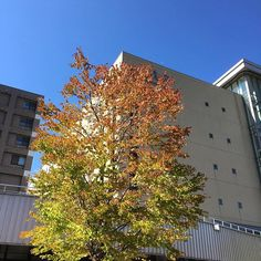#札幌 天気がとても良いです  #秋晴れ