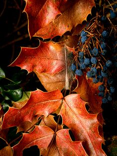 Autumn/Fall Leaves. Nature Photography.