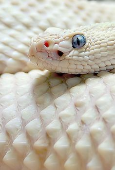 I AM TERRIFIED OF SNAKES, but sometimes humans can brings out the beauty in things some of us can't see.