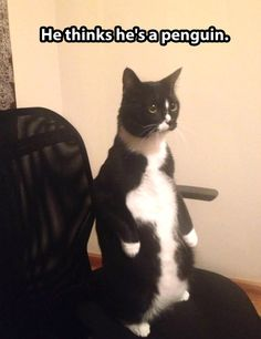 Cat thinks he's a penguin…
