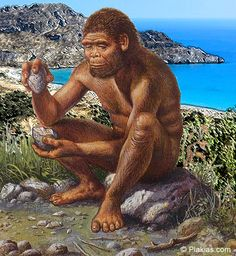Quiz How does the Homo Habilis differ from modern humans? The average Homo habilis individual is thought to have been about five feet tall and 100 pounds, although females may have been smaller. Homo Habilis, Homo Heidelbergensis, Primates, Empire Romain, Early Humans, Pinterest Memes, Human Evolution, Old Stone, Anthropology