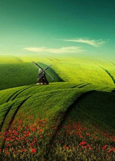Lush waves of green