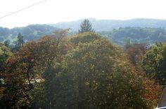 Herbstliche Aussicht aus Wohnzimmer einer Wiener WG.  WG-Zimmer in Hietzing.  #Herbst #autumn #cozy #Ausblick #WGZimmer #flatshare