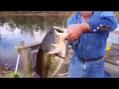 Вот это рыбалка Ловля рыбы руками топ 7 Приколы на рыбалке
