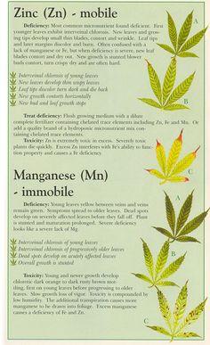 Cannabis Deficiencies - Imgur