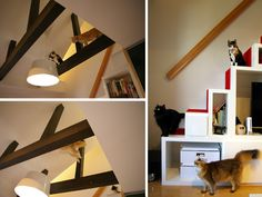 More gorgeous cat walk layouts/bookcase cat climbing!
