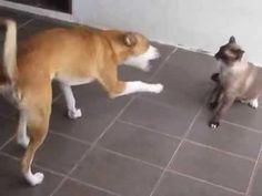Apolo e Teodoro - um cão e um gato que se amam de verdade