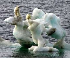 climate change/unusual habitats polar bears are endangered Environmental Issues, Animals Of The World, Endangered Species, Global Warming, Beautiful Creatures, Animal Kingdom, Climate Change, Mammals, Habitats