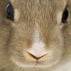Close-up on a rabbit face