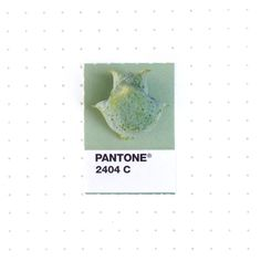 Pantone 2404 color match.  A spiky seed cone of the Atlantic Whitecedar, which is actually a cypress, not a true cedar.