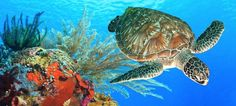 Tomorrow is World Turtle Day! Turtles need to be respected and protected! Take a few minutes from your time to know more about this amazing creatures! - 25 Interesting Facts about Turtles | TopLst