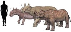 Prehistoric taxonomie | DINOCERATA: 1.Prodinoceras xinjiangensis...