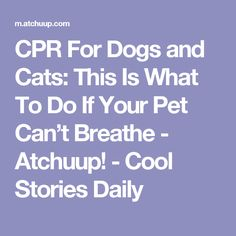 CPR For Dogs and Cats: This Is What To Do If Your Pet Can't Breathe - Atchuup! - Cool Stories Daily