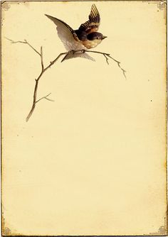 What a lovely little bird on a branch. This would be a beautiful framed piece or used as writing paper.