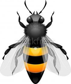 Stock photo: Honey Bee