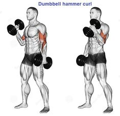 Best Dumbbell Exercises For Biceps Fitness Workouts, Gym Workout Tips, Sport Fitness, Muscle Fitness, Fun Workouts, Dumbbell Bicep Workout, Best Dumbbell Exercises, Training Exercises, Biceps And Triceps