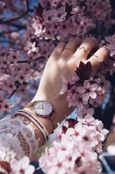 Check out this awesome post: Ideas fotos en color rosa Beautiful Flowers Wallpapers, Beautiful Nature Wallpaper, Pretty Wallpapers, Leaf Photography, Girl Photography Poses, Creative Photography, Eiffel Tower Photography, Hand Fotografie, Beautiful Girl Drawing