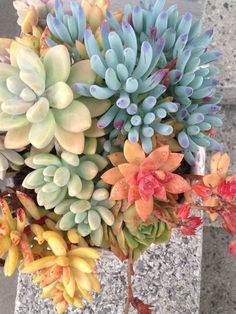 rainbow arrangement of succulents